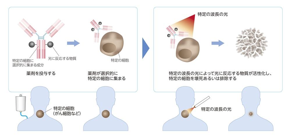 【イルミノックス®プラットフォームを基に開発された医薬品・医療機器による光免疫療法の仕組み】